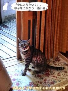 「中に入りたい?」。様子をうかがう「通い猫」