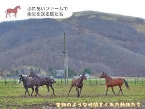 ふれあいファームで余生を送る馬たち