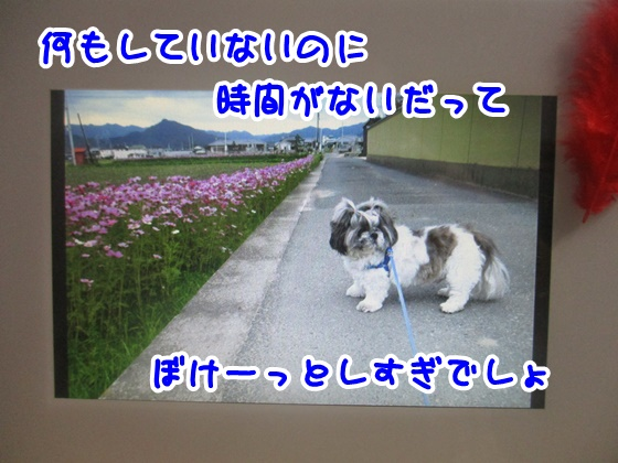 1103-01_20171103185636abb.jpg