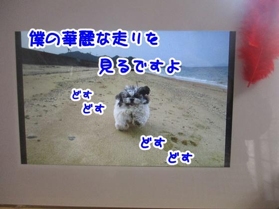 1113-07_20171113114129fd0.jpg