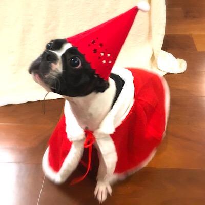 リゲルボステリクリスマス1うぃんくるむ17