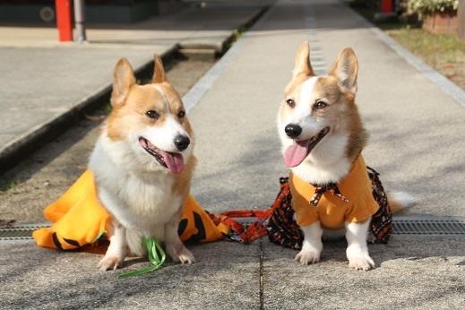 恋木神社 2017-10-29-6