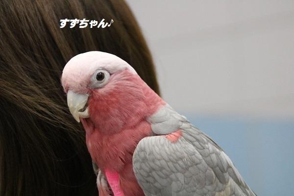 愛護フェス 2017-11-12-8