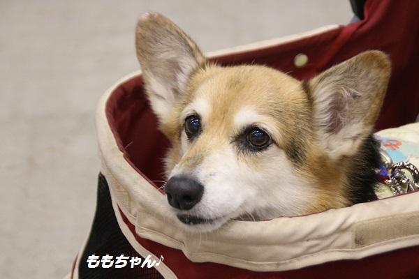 愛護フェス 2017-11-12-10