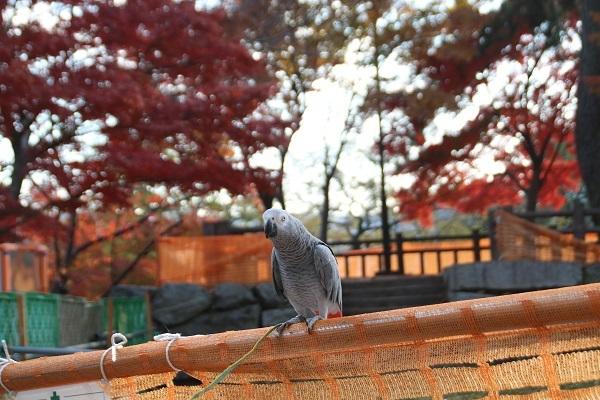 小倉城 2017-11-29-3