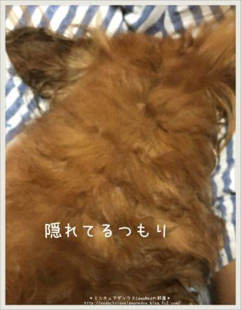 2017/10/08 かくれ
