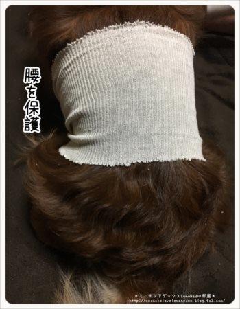 ストッキネット 腰の保護