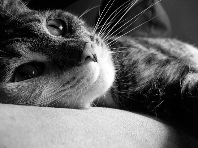 cat-1738329_640.jpg