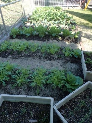 菜園29・11・12