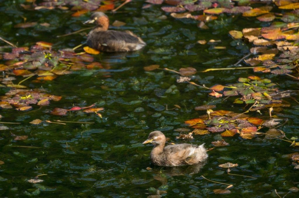 池と落ち葉と鳥 (10Pic)