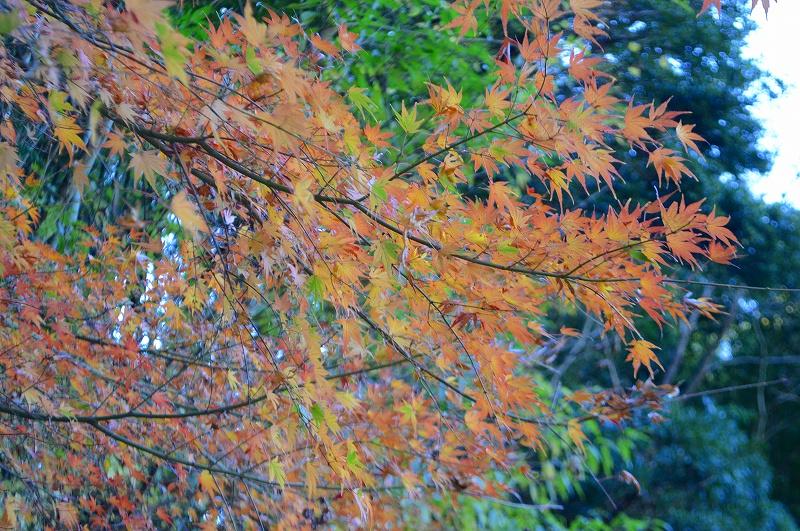 yaizu-alps30_800s-DSC_7638.jpg