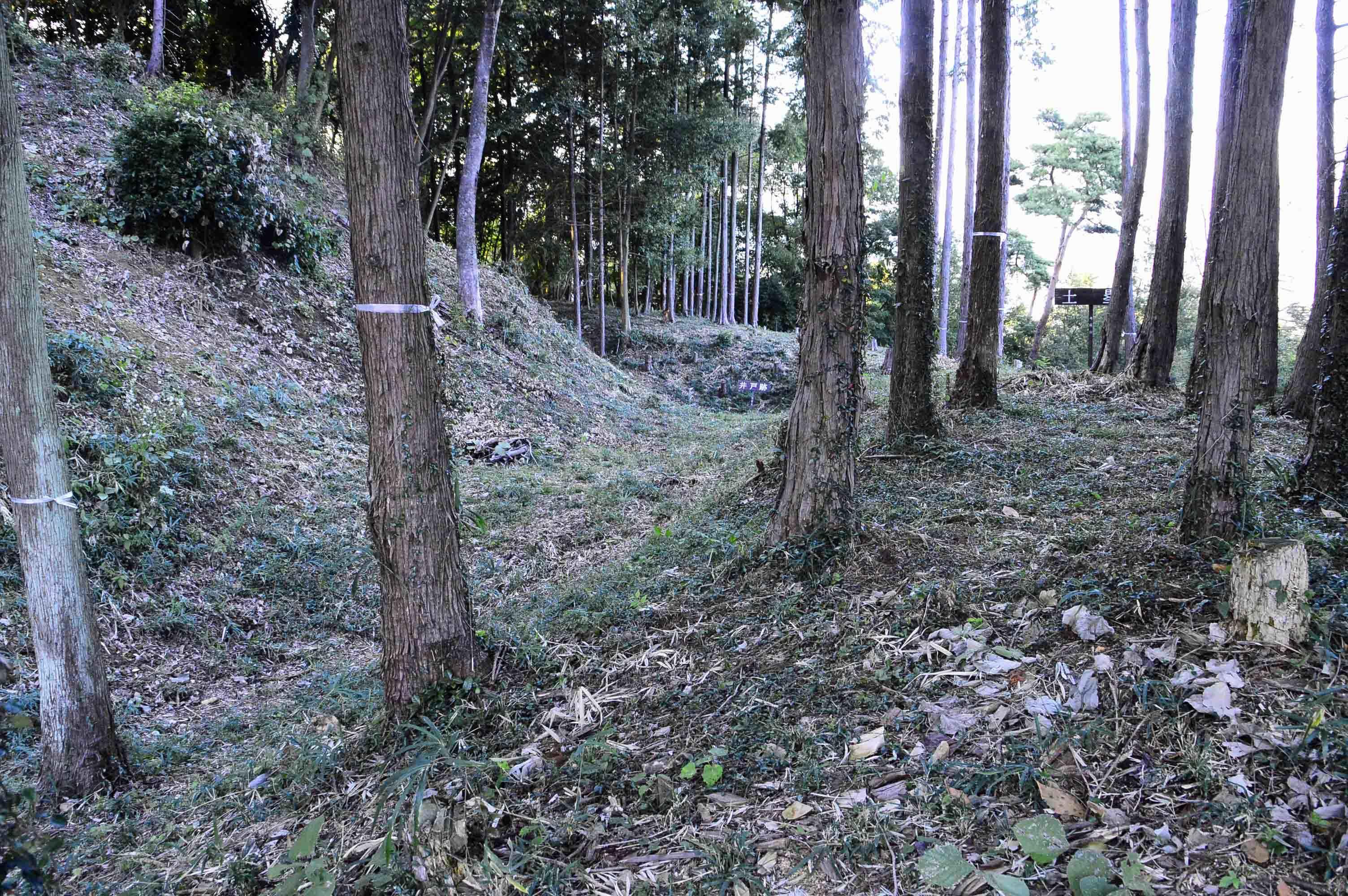 茶臼山 横堀1