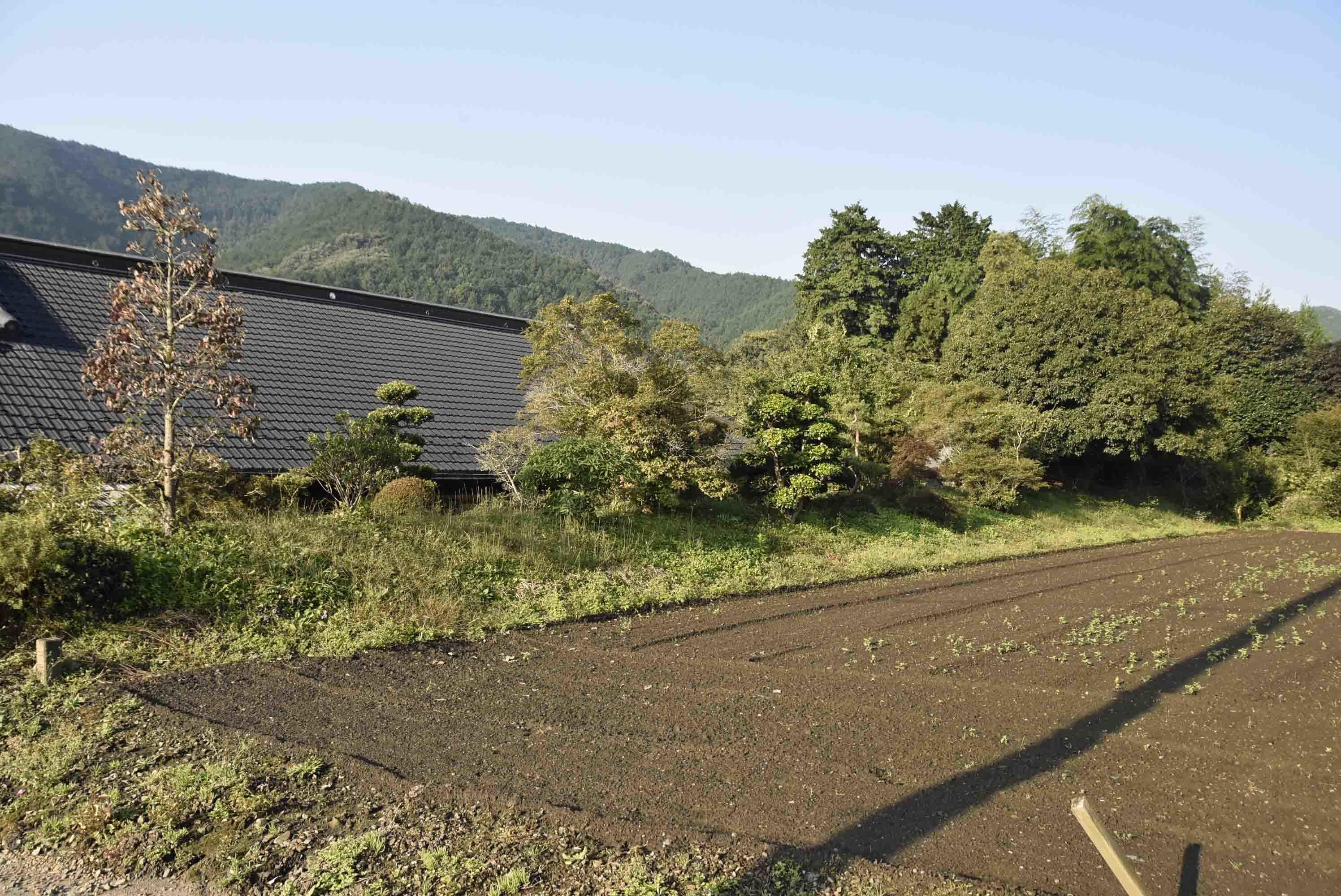 大塚城 居館の土塁
