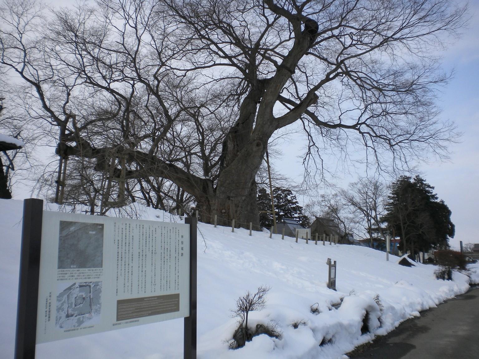 高瀬の大木 二ノ丸櫓台
