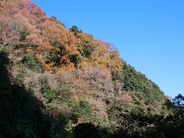 二の足林道紅葉