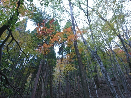 009 竹の畑山