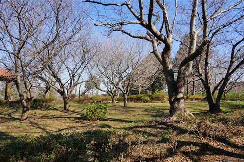 6権現山公園