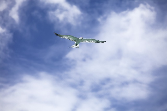 bird-2269272_640.jpg
