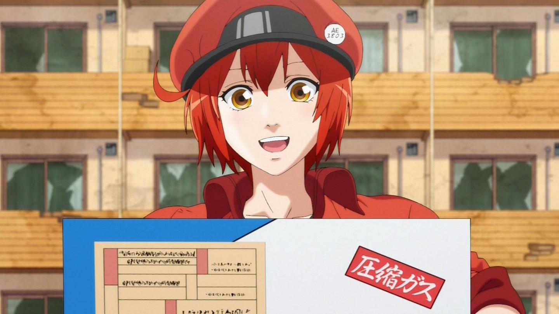 【終】『はたらく細胞』第13話(最終話)感想・・・本当に勉強になるアニメだった・・・やっぱり輸血最高や、明日オタク共は献血に行こう!