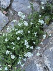 コトル別荘の花