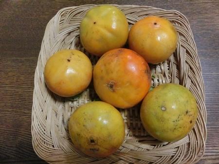今年の初柿