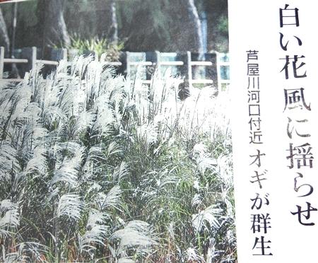 オギの花2