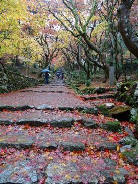 2017年11月16日撮影 鶏足寺