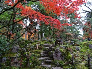 2017年11月20日 西明寺 紅葉と苔
