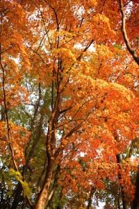 森林植物園-087