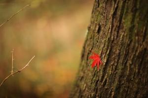 森林植物園-058