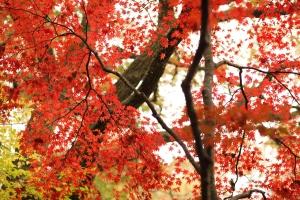 森林植物園-056
