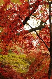 森林植物園-050