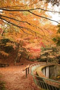 森林植物園-045