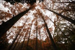 森林植物園-018