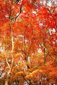 森林植物園-088