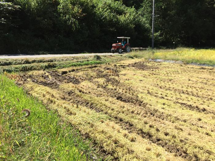 農繁期  2017年 秋  コシヒカリ 稲刈り 9