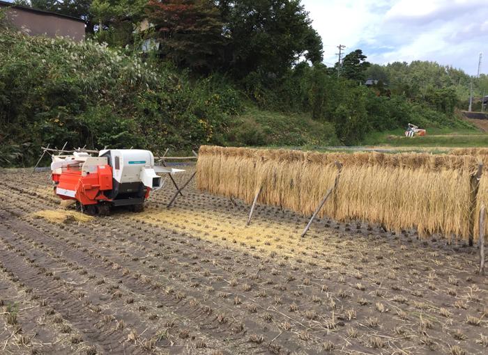農繁期  2017年 秋  コシヒカリ 脱穀 1