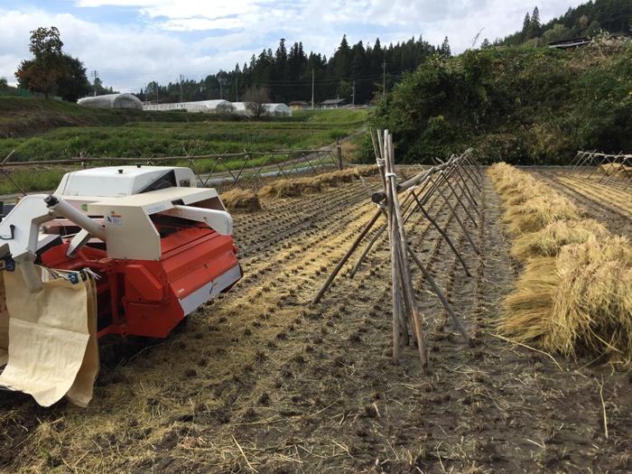 農繁期  2017年 秋  コシヒカリ 脱穀 2