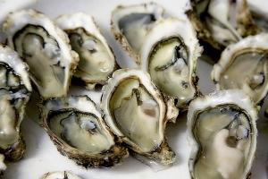 oyster-1522835_960_720.jpg