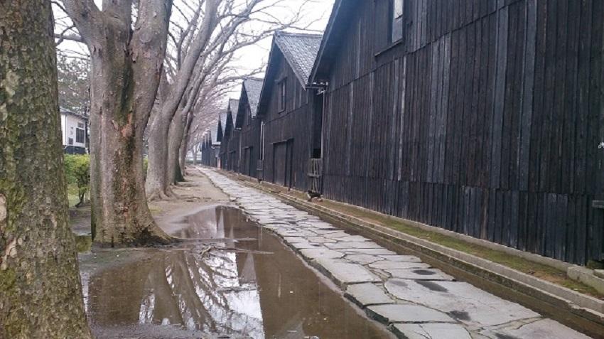 山居倉庫 ケヤキ並木2