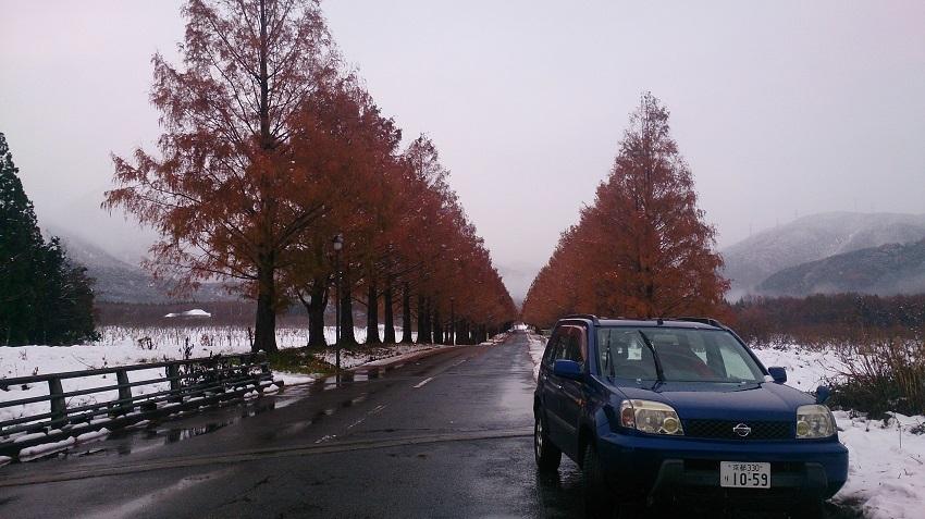 メタセコイア並木 秋冬1