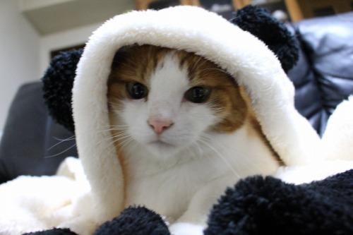 ブログNo.1087(パンダ猫)3