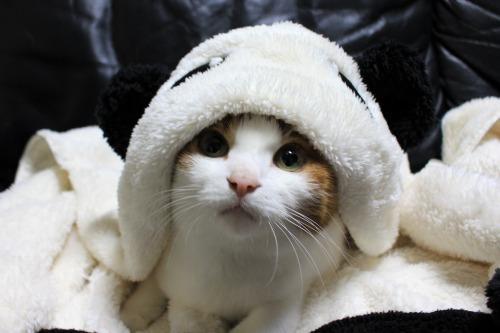 ブログNo.1087(パンダ猫)4