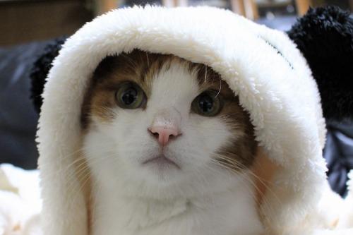 ブログNo.1087(パンダ猫)5