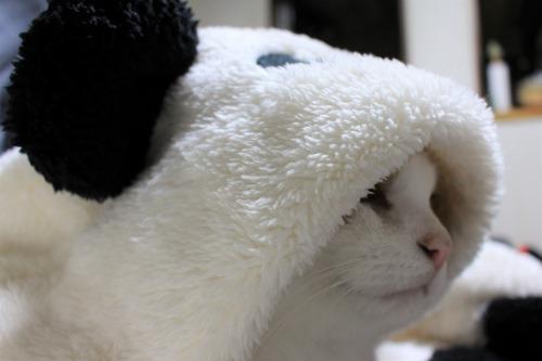 ブログNo.1087(パンダ猫)6
