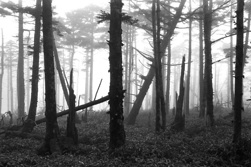 霧の原生林(大台ケ原)01