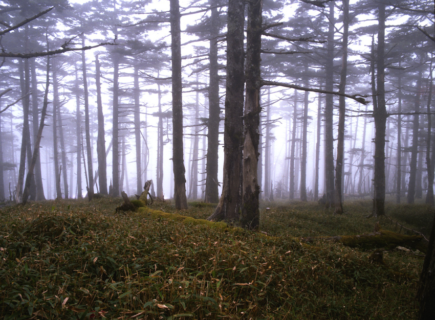 霧の原生林(大台ケ原)02