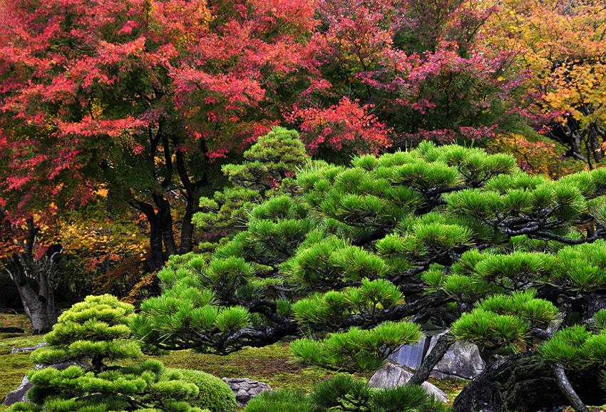 日本庭園(松江由志園)01