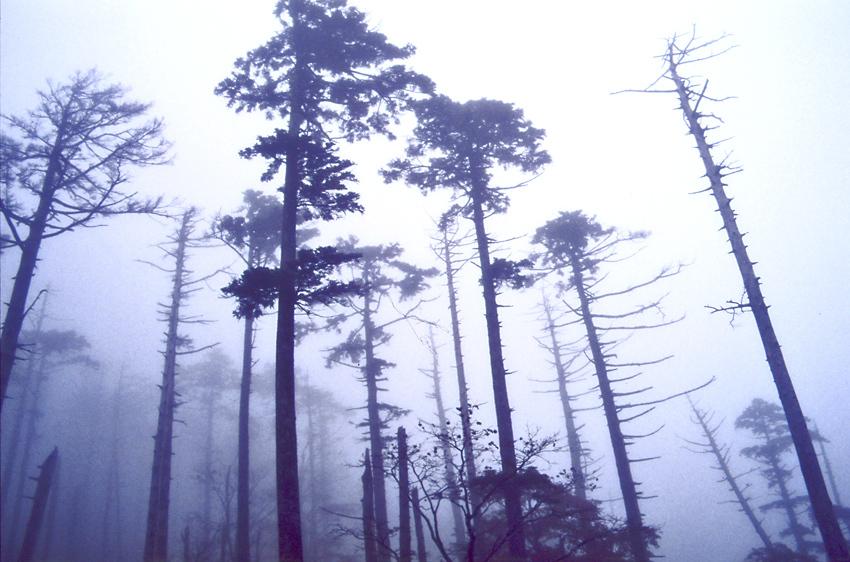 霧の大台ヶ原03