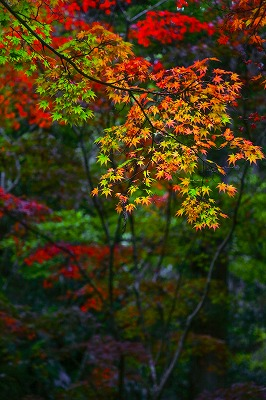 akiko_photography_little203-2.jpg